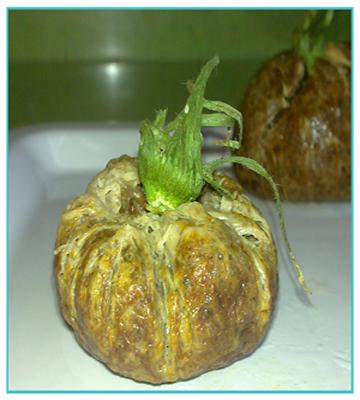 receta-falso-tomate de villada
